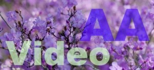 AA-sibir-video-2015